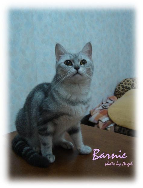 貓咪相簿更新:芭比&麻糬